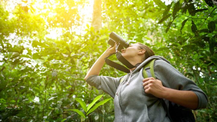 Ilhabela organiza Festival de Aves em outubro
