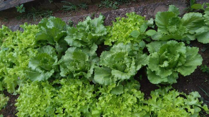 Farm to table: Vale do Sonho oferece produtos direto da horta